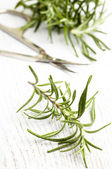 Rosemary and scissors — Stock Photo