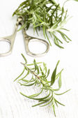 Rosemary with scissors — Stock Photo