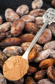 Cocoa powder and cocoa beans — Stock Photo