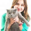 Girl with Scottish Fold — Stock Photo
