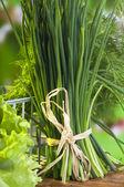 Walijski-cebula — Zdjęcie stockowe