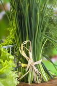Welsh onion — Stockfoto