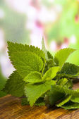 Lamium album nettle — Stock Photo