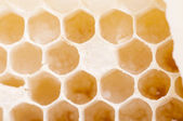 Honeycombs — Stock Photo