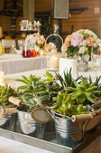 Decorative succulent plants — Stock Photo