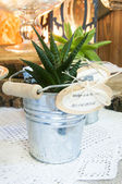 Aeonium and Haworthia plants — Stock Photo