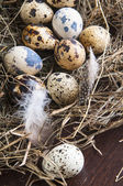 Quail eggs — Photo