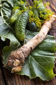Fresh horseradish — Stock Photo