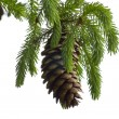 Pine Cone And Branch — Stock Photo #6727919