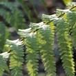 Branch of a fern in the forest - Stockfoto