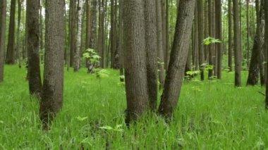 Cienistych lasów — Wideo stockowe