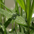 Water drops on green grass after the rain - Stock Photo