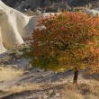 Stock Photo: Autumn in Cappadocia