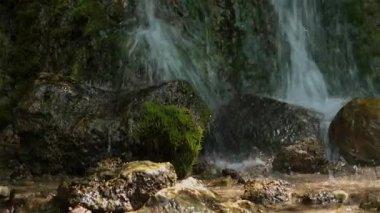 Ormandaki creek — Stok video