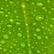 Green leaf with drops of water — Stock Photo #21732025
