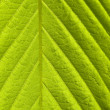 Green leaf macro shot — Stock Photo