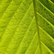Green leaf macro shot — Stock Photo