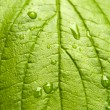 Stock Photo: Green leaf with drops of water