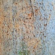 Old rusty metal texture — Stock Photo