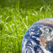 Royalty-Free Stock Photo: Green grass and earth image