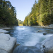 Stock Photo: River in the forest