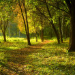 Stock Photo: Autumn forest path