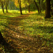 Autumn forest path — Stock Photo #21734897