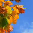 Autumn leaves with blue sky - Stok fotoğraf