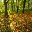 Autumn forest path — Stock Photo #21734931