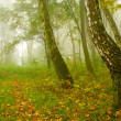 Autumn birch forest path during misty morning — Stock Photo