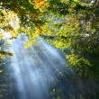 Forest with rays of light — Stock Photo