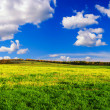 Stock Photo: Green grass and blue sky with white clouds