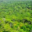 Aerial view of a green mountain forest — Stock Photo