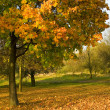 Under the autumn tree - Stock fotografie