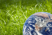 Green grass and earth image — Stock Photo
