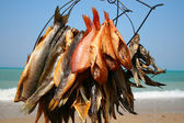 Fish with sea on background — Stock Photo