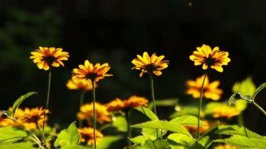 Summer flowers blooming — ストックビデオ