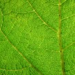 Green leaf macro close up. — Stock Photo
