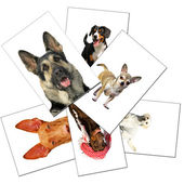 Collection of dogs photos — Stock Photo