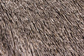Thatched roof texture. Closeup of straws — Stockfoto