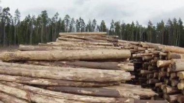 Raw wood storage, air view — 图库视频影像