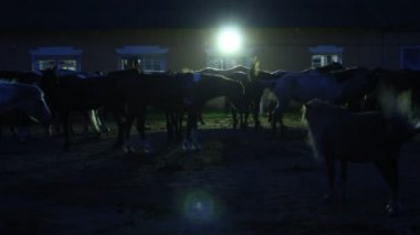 Horses in Stables at Night — Video Stock