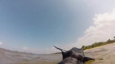 Dog  swimming with toy in the sea — Stok video