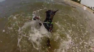 Dog swimming in the  sea — Stok video