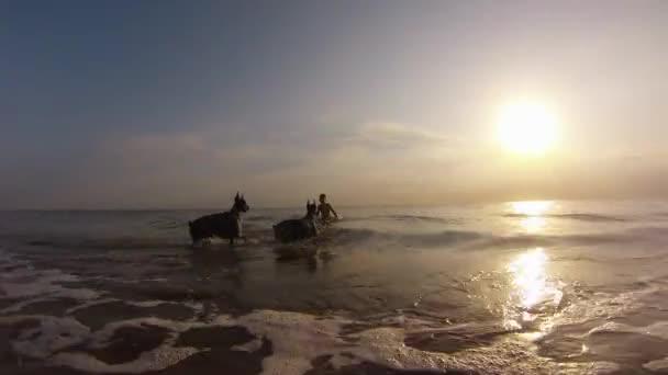Niño jugando con dos perros en el mar — Vídeo de stock