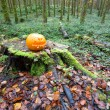Halloween Pumpkin in pine forest — Stock Photo
