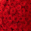 Stock Photo: Roses background