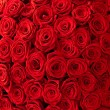 Roses background — 图库照片 #12466832