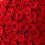 rozen achtergrond — Stockfoto