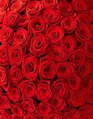 розы фон — Стоковое фото